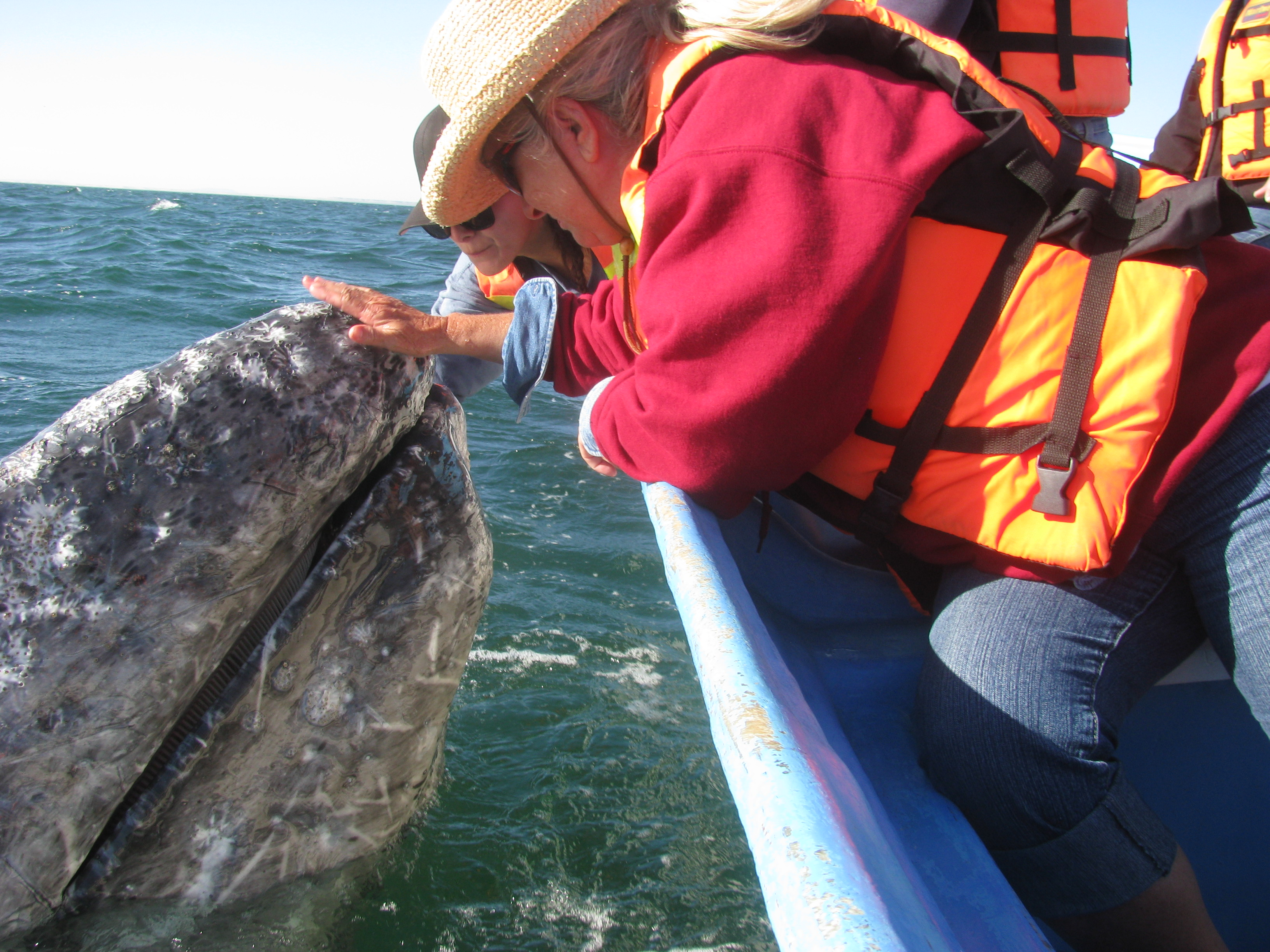 Sharen-Whale